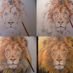 etapes du dessin lion